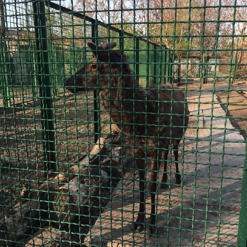 zoopark-dnepropetrovsk