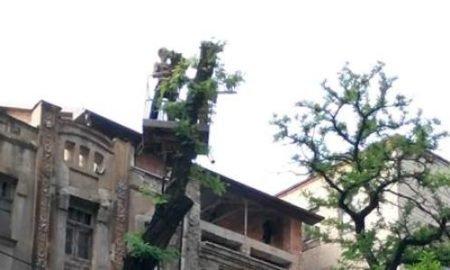 Обрезка деревьев Днепр