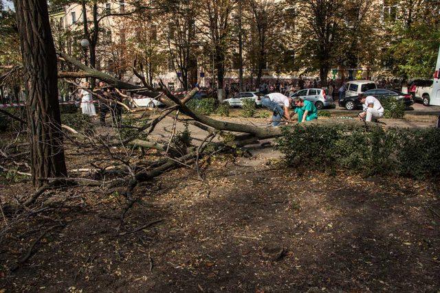Ветки старых деревьев могут убить человека - случай с девушкой из Межевой тому подтверждение