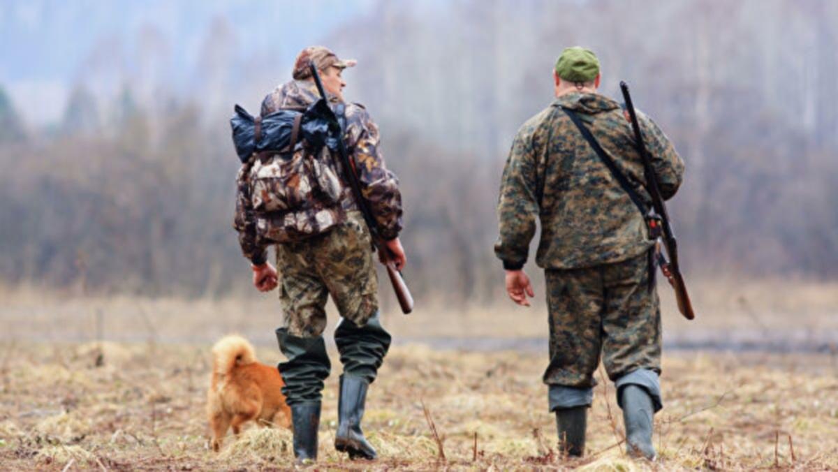 В Днепропетровской области стартует сезон охоты: что можно и нельзя делать  | Информатор Деньги